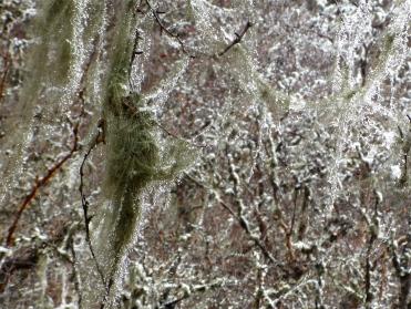 Dew drop moss